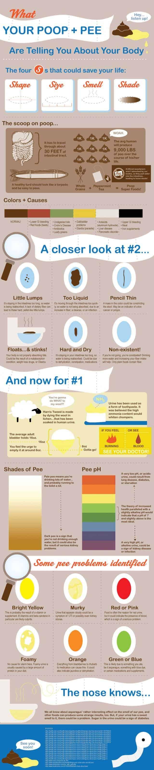 poep en plas infographic