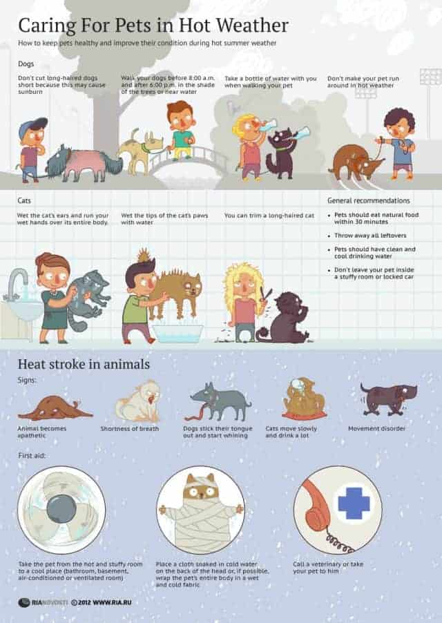 Caring For Your Pets In Hot Weather [infographic]
