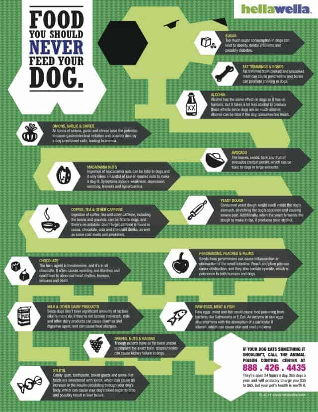 What not to feed your dog [Infographic]