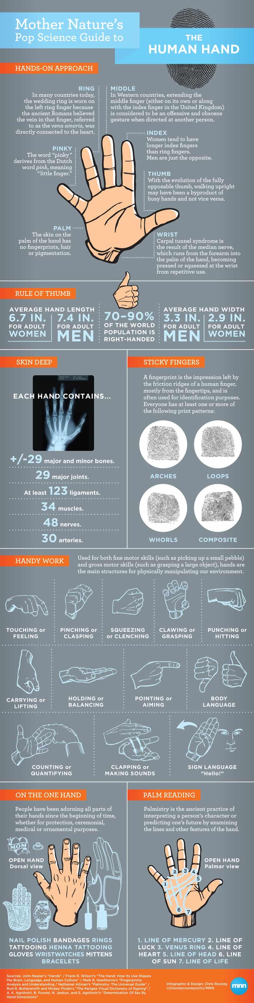 the human hand
