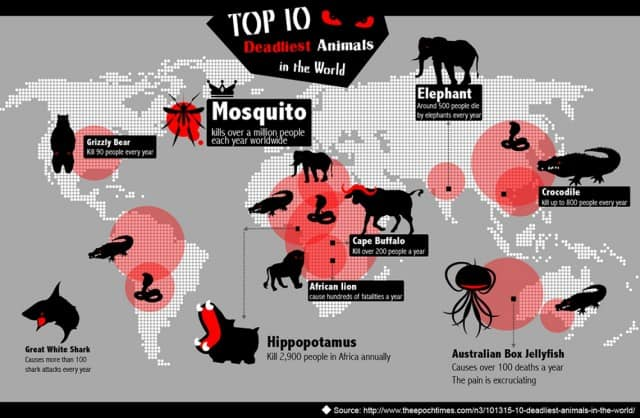 top-10-deadliest-animals-in-the-world_52ba865607db3_w1500