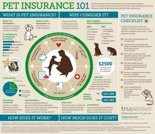 petinsurance101-1024x884