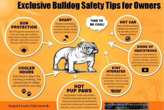 exclusive-bulldog-safety-tips-for-owners_53c3c73c6b93a_w1500