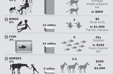 Top Ten Pets