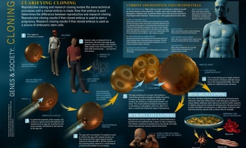 Cloning infographic