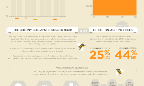 Mysterious Honey Bee Extinction Infographic
