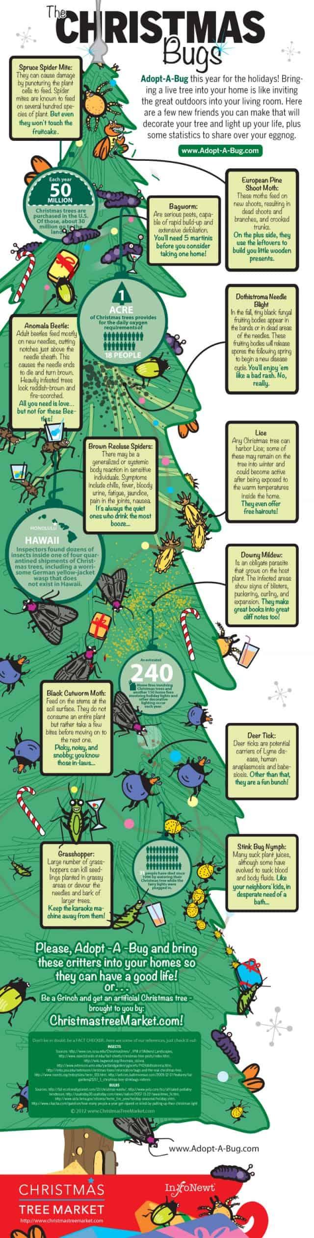 Christmas Bugs Infographic