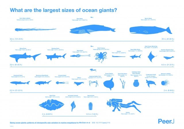 Largest Sizes of Ocean Giants Infographic