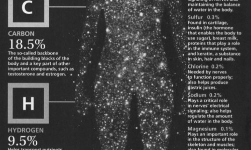 Human Body Ingredients Infographic