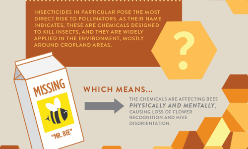 Infographic shows what is killing bees and how we should prevent that until its too late.
