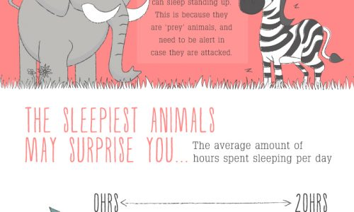 infographic about animals and their sleep habits