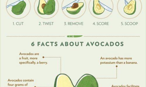 Avocado Fact Chart