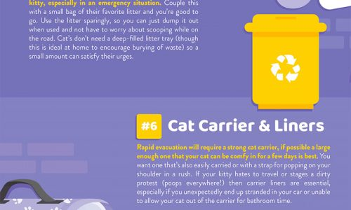 how to prepare a kit for any emergency that may arise with your cat