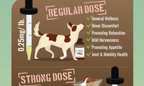 Here is a guide to proper CBD dosage for pets